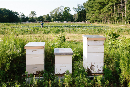 Beehives, Saltbox Farm-Concord von Massachusetts Office of Travel & Tourism
